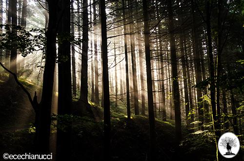 Raggi di sole tra gli alberi nella foresta della Riserva Naturale Acquerino Cantagallo