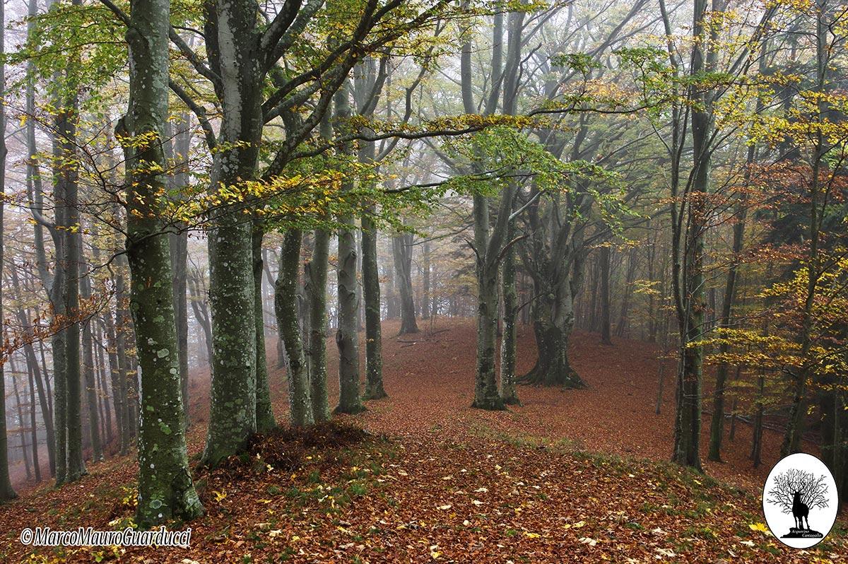 Alberi collina nebbia