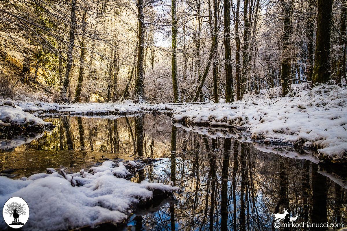 Alberi riflessi nell'acqua neve