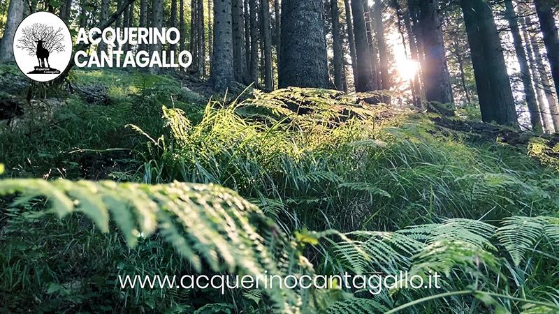 Acquerino Cantagallo - L'Associazione