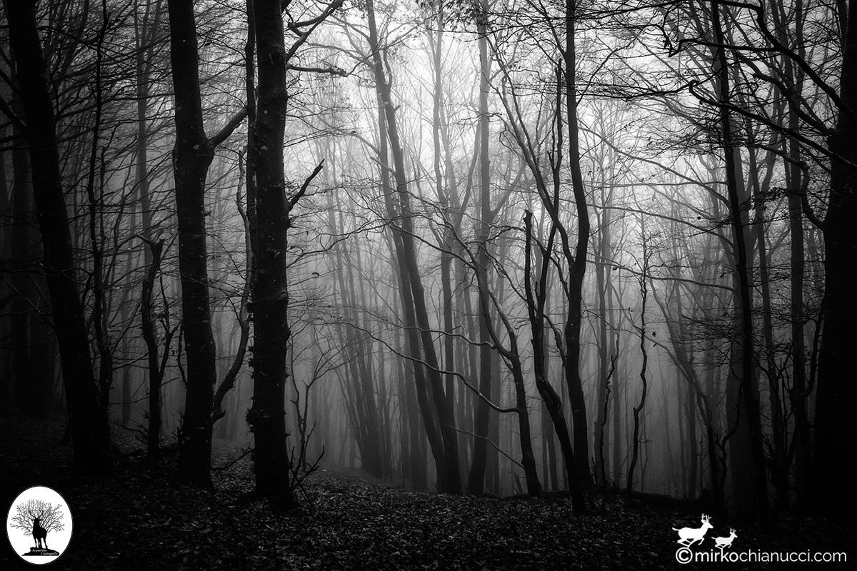 Alberi del bosco con nebbia in bianco e nero