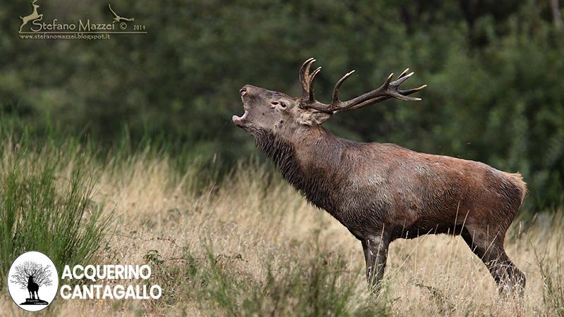 La fauna della Riserva Naturale Acquerino Cantagallo