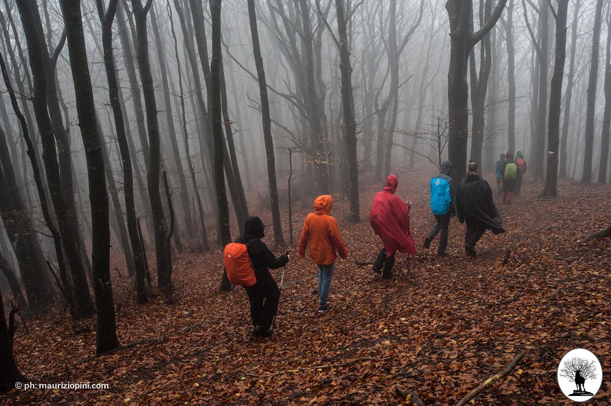 Escursione nella Riserva con pioggia
