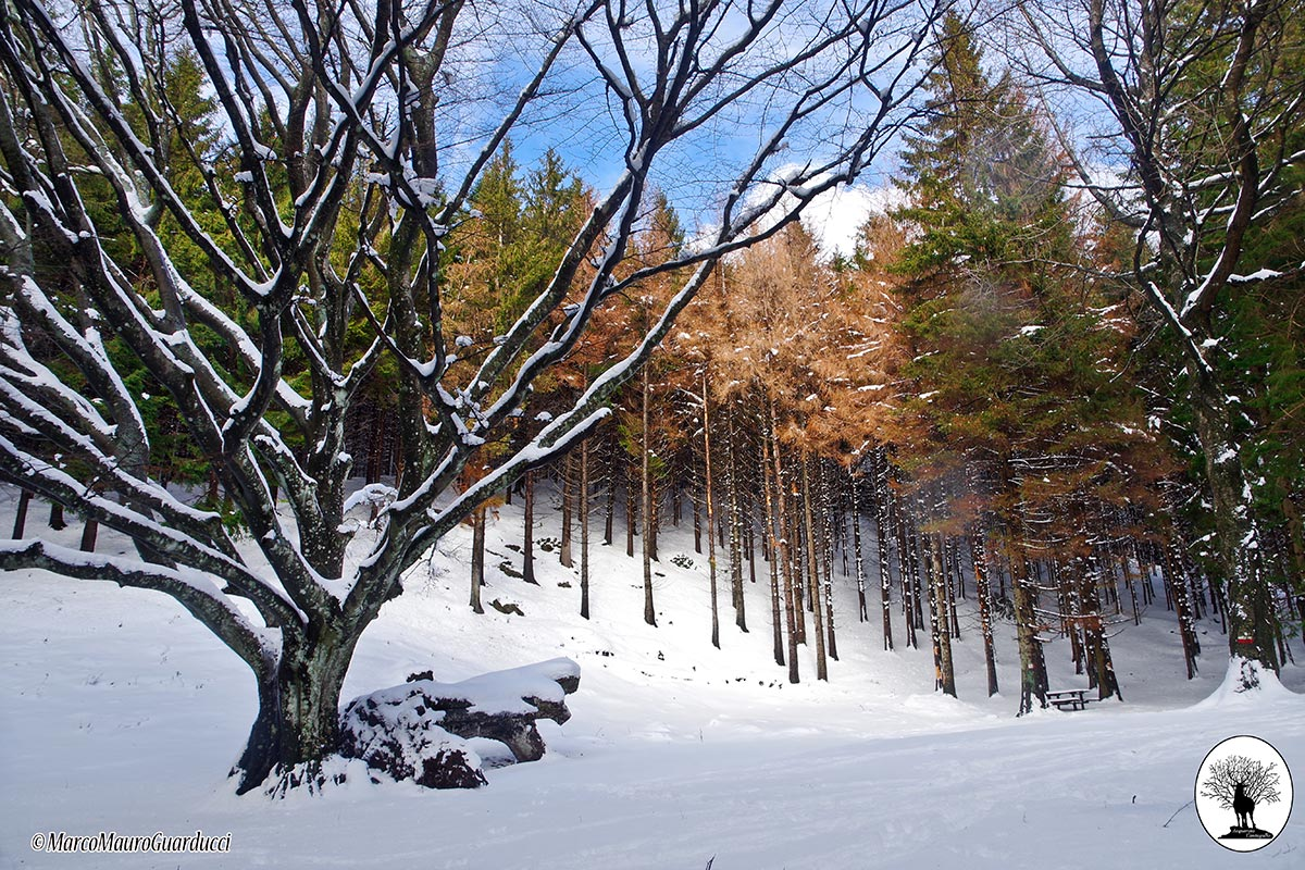 Faggione di Luogomano con neve