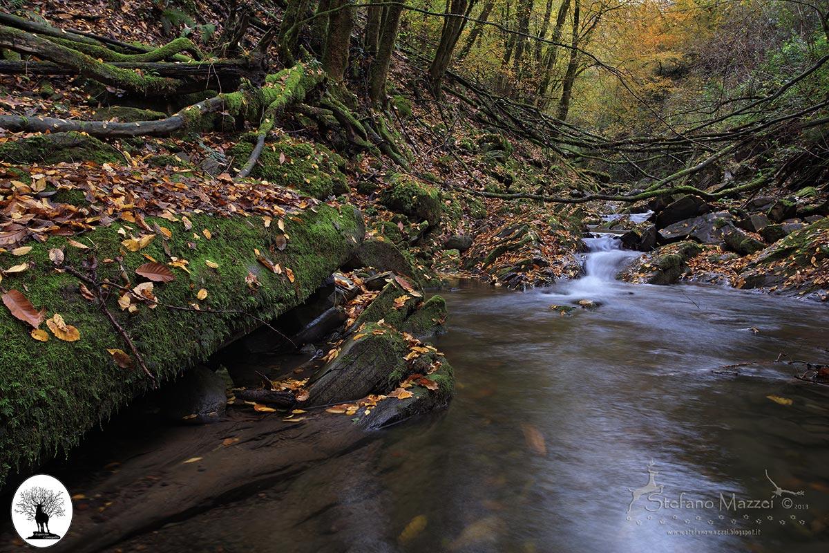 Fiume nel bosco della Riserva Naturale Acquerino Cantagallo