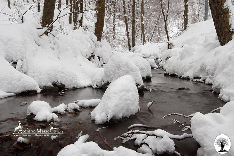 Fiume d'inverno con neve nella Riserva Naturale Acquerino Cantagallo