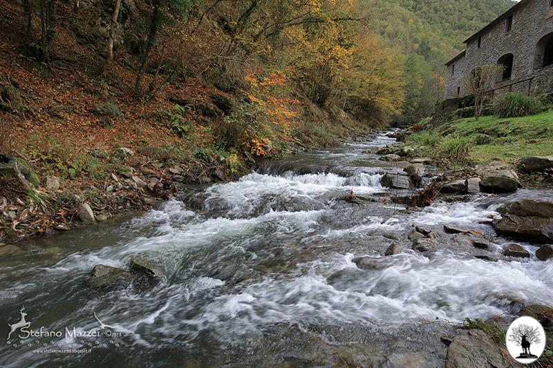 Fiume nel bosco con cascina nella Riserva Naturale Acquerino Cantagallo