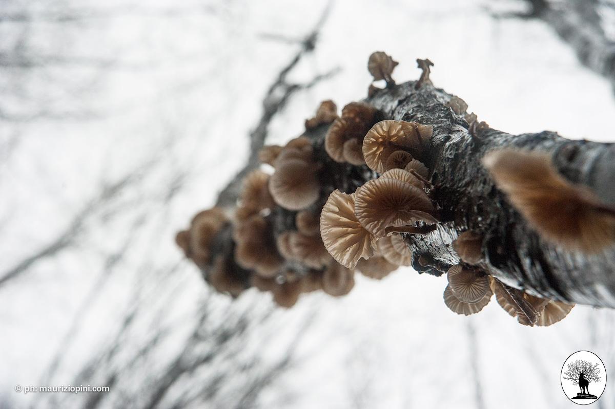 Funghi che crescono sull'albero visti dal basso