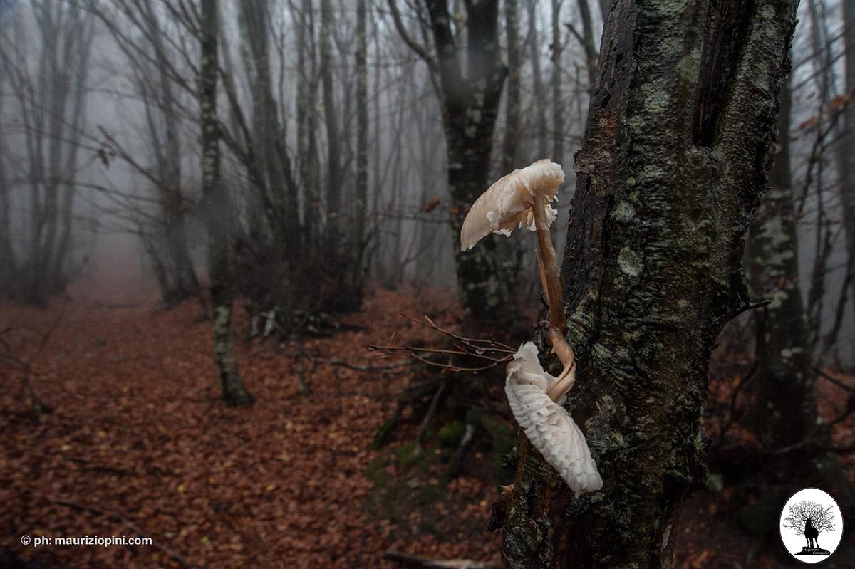 Grande fungo su albero nel bosco con pioggia