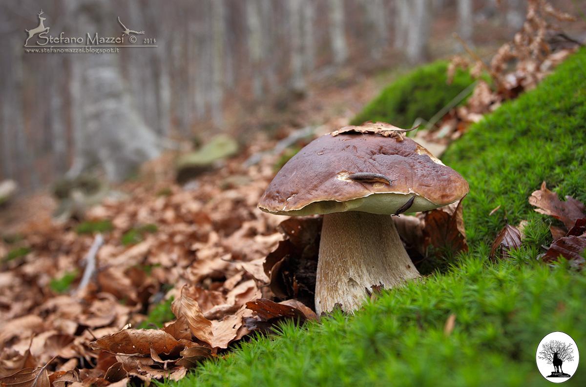 Lumache sopra fungo nel bosco in autunno