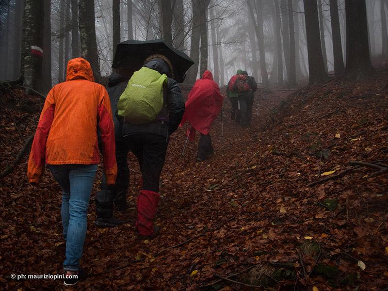 Escursione Fuori dal Web con pioggia nella Riserva Naturale Acquerino Cantagallo