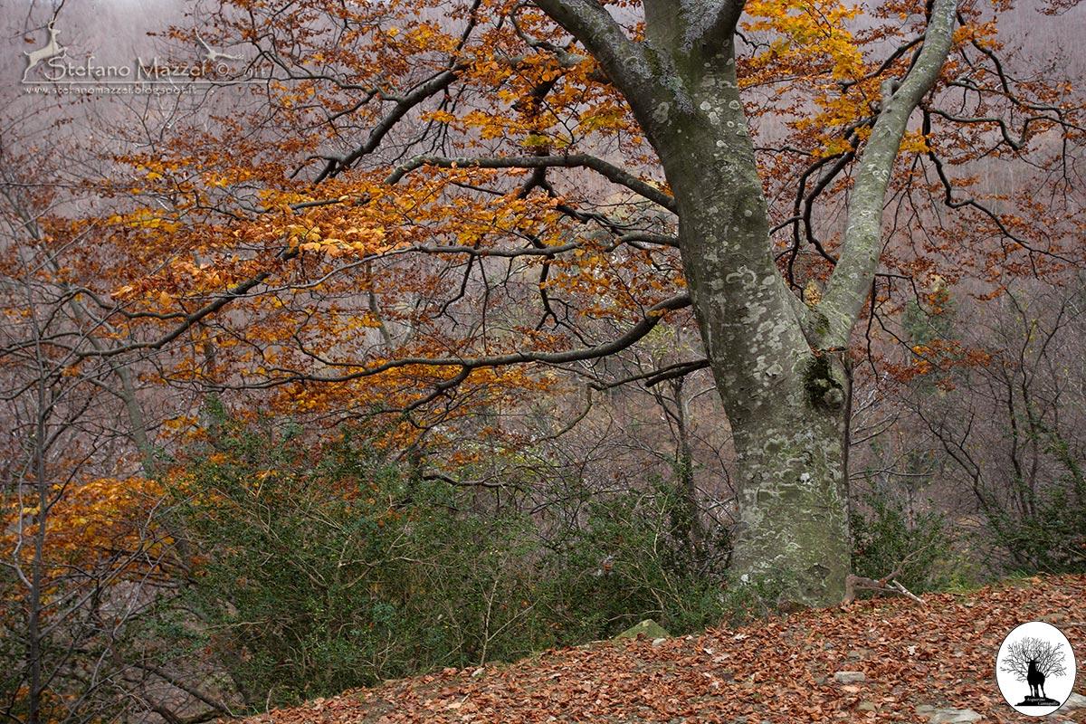 Grande albero autunno foglie colorate