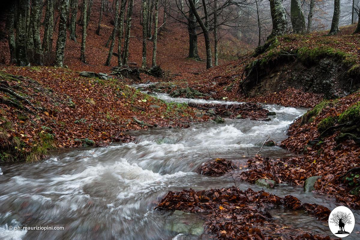 Limentrino fiume movimento acqua