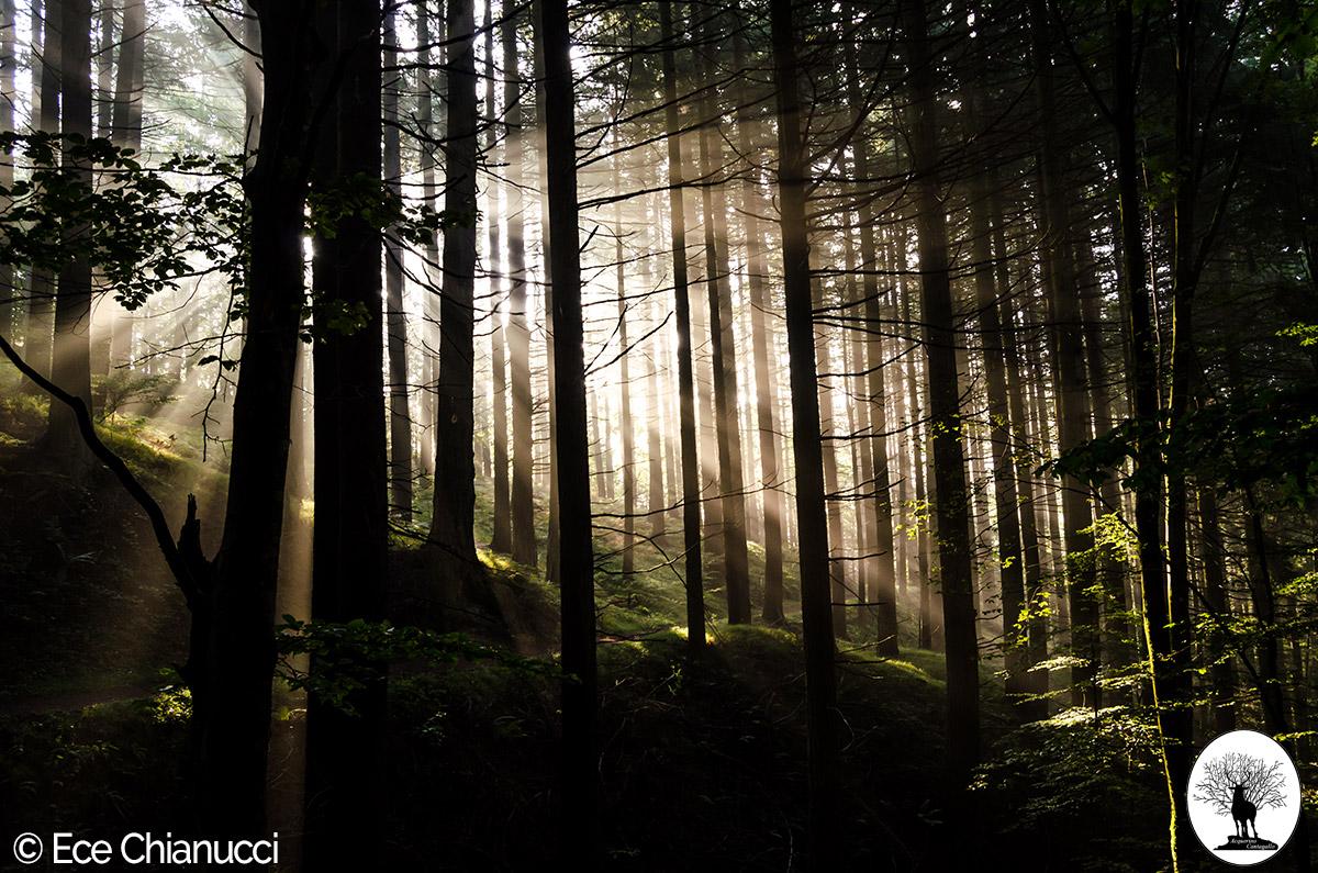 Luce del sole tra gli alberi della Riserva Naturale Acquerino Cantagallo