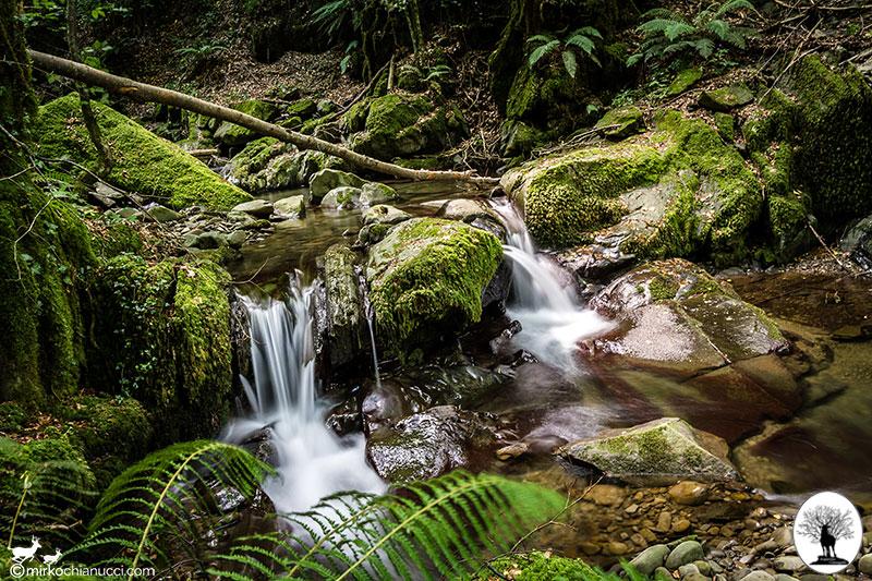 Piccola cascata tra la vegetazione del bosco