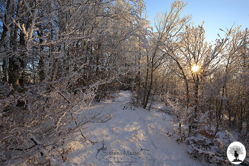 Sole tra gli alberi con neve