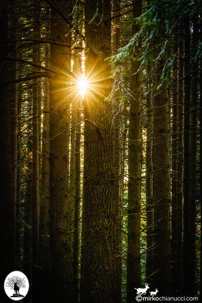 Sole tra gli alberi nella Riserva Naturale Acquerino Cantagallo