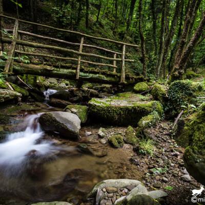 Ponticino di legno nella Riserva Naturale Acquerino Cantagallo